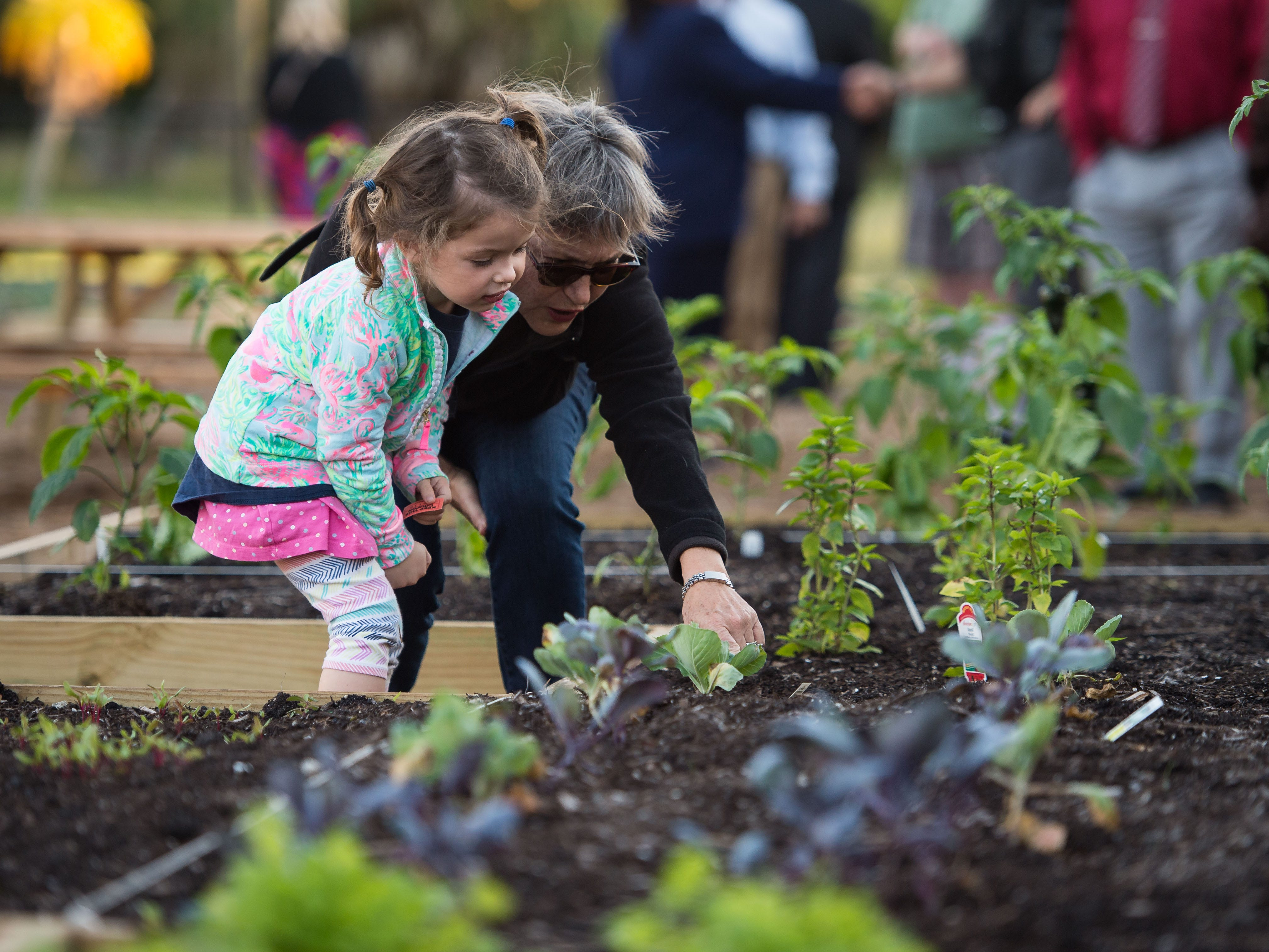 "Pat Bartlett, of Stuart, shows her granddaughter, Caroline Cross, 4, the vegetables growing at the new East Stuart Community Garden on Tuesday, Nov. 27, 2018, at the official ribbon cutting ceremony held by House of Hope and City of Stuart Commissioners. ""I brought her today too see what a community garden is all about,"" Bartlett said, ""it brings the community closer...to get to know your neighbors."" The collaborative garden, located at 520 SE Florida St. in East Stuart, will offer educational opportunities for gardening and better nutrition, as well as help supply local pantries and soup kitchens with fresh produce. Go to www.hohmartin.org for more information, or contact House of Hope at (772) 286-4673."