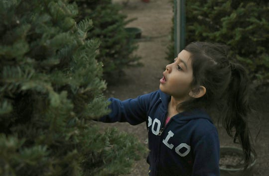 Leia Godinez searches for the perfect Christmas tree on Monday, Nov. 26.