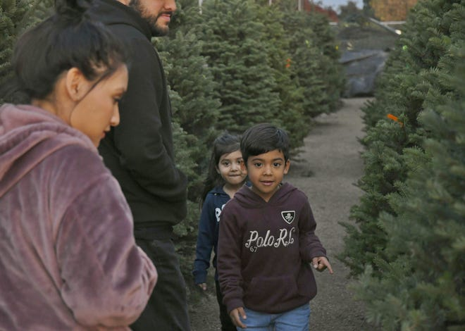 Leia, 4, and Alexander Godinez, 6, search for the perfect Christmas tree on Monday, Nov. 26.