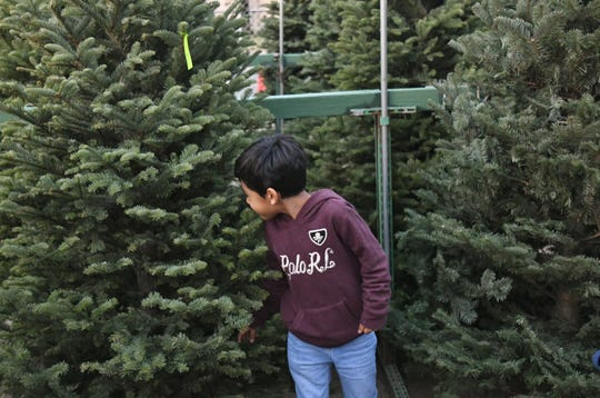 Alexander Godinez searches for the perfect Christmas tree.