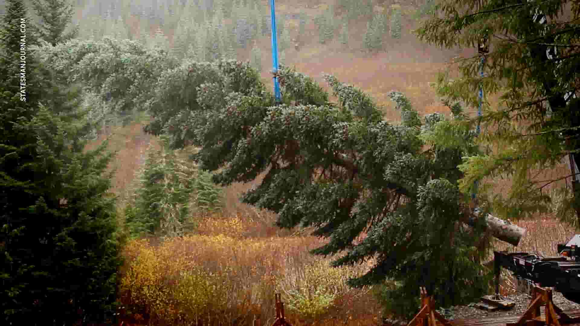 Artesia Trucking Company Delivers Christmas Tree To U S Capitol