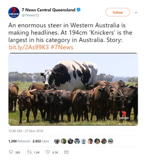"""A beast of a bovine, Knickers the steer is too big to be sold or slaughtered, his owner told Australian media this week. Naturally, the colossal cattle has his owner and the Internet saying, """"Holy cow."""""""