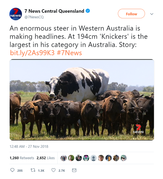 Knickers The Steer Australia