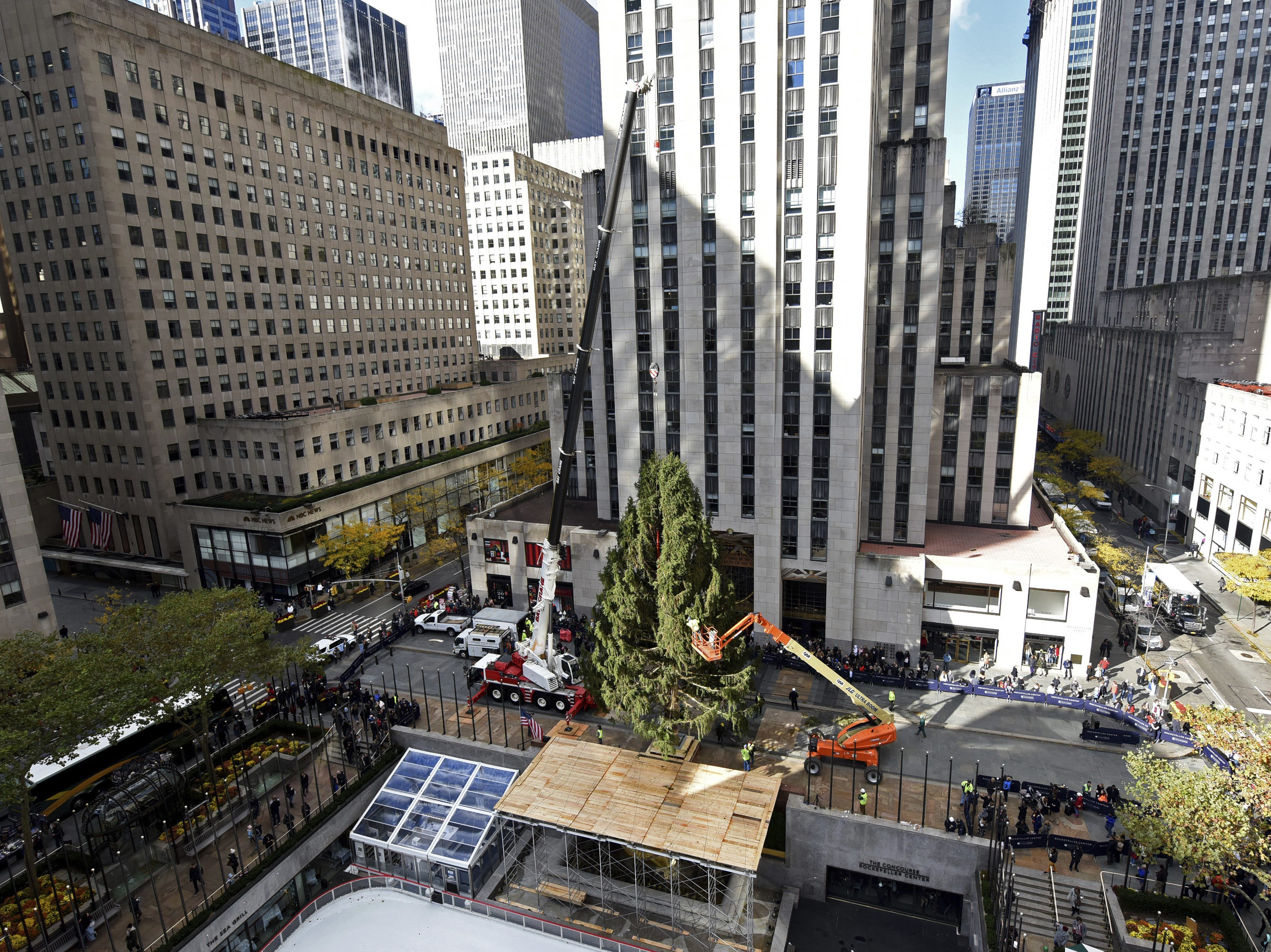 This year?s Rockefeller Center Christmas tree, which was donated by a Wallkill couple, was set up in its new New York City home on Saturday, where it will stay until Jan. 7. The tree will be lit up on Nov. 28 during an official televised lighting ceremony. The 72-foot-tall, 12-ton Norway spruce is 75 years old and was nicknamed Shelby by its Wallkill owners Lissette Gutierrez and Shirley Figueroa.