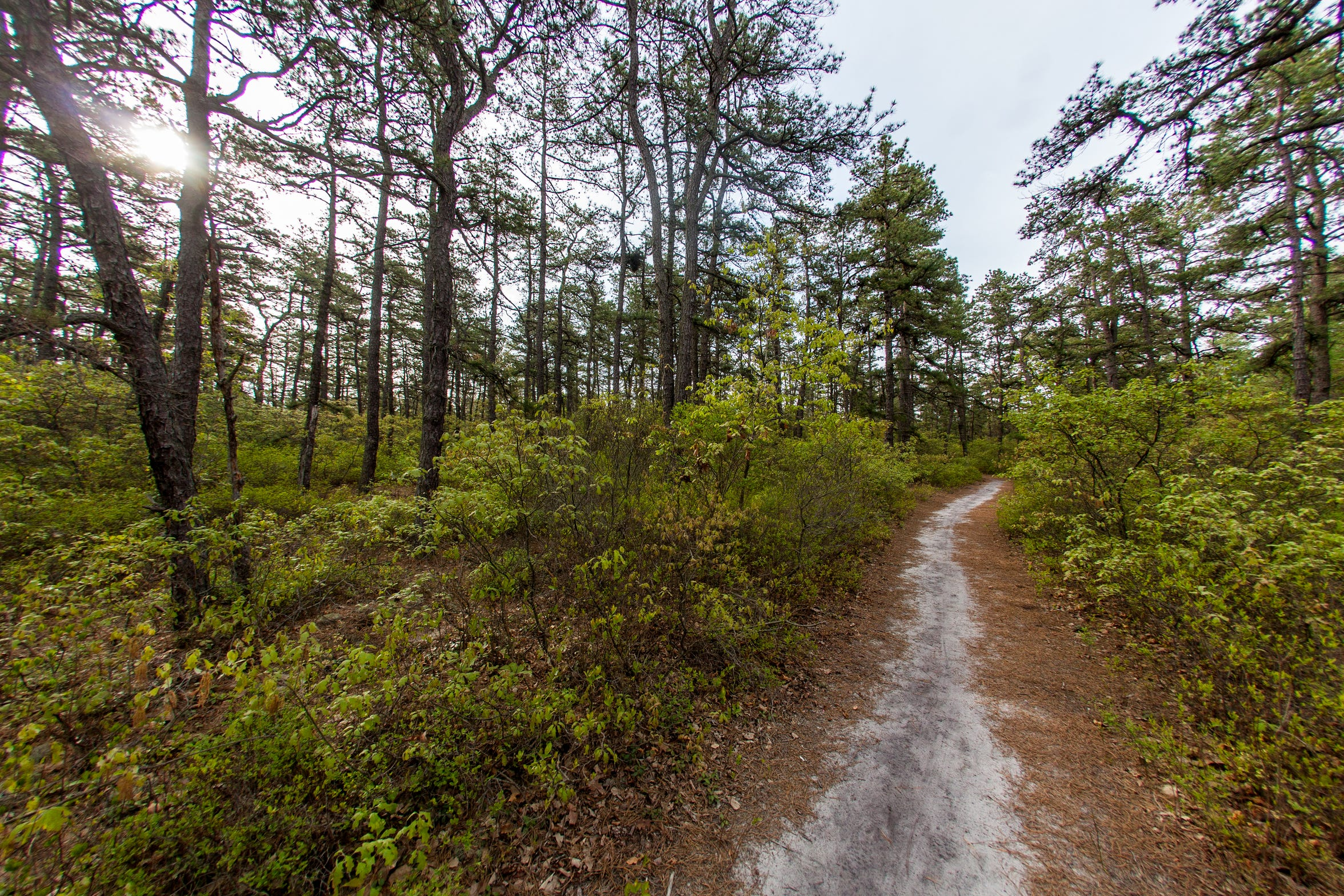 The New Jersey Pine Barrens at Jake's Branch County Park in Beachwood.