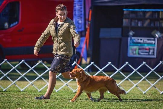 Junior handler Anna Pitstick shows toller retriever Freyja.
