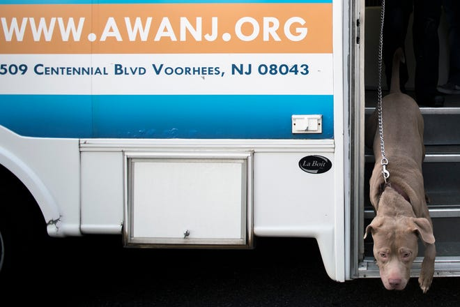 Prince, at pit bull mix, exits the mobile clinic as the Animal Welfare Association offers free pet care Wednesday, Nov. 28, 2018 at Yorkship Square in Camden, N.J.