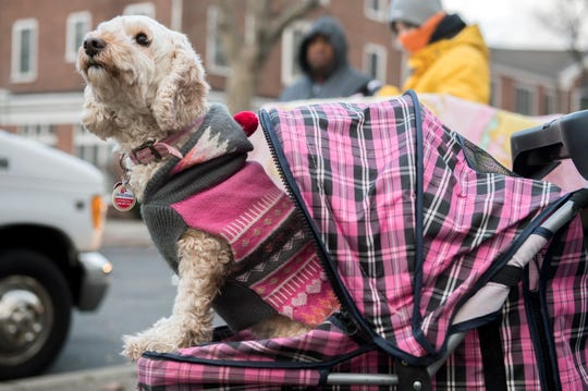 Grace, a cockapoodle, waits in line as the Animal Welfare Association offers free pet care Wednesday, Nov. 28, 2018 at Yorkship Square in Camden, N.J.