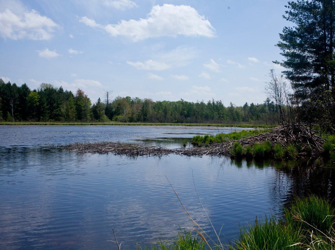 Nearly half-million acres of Michigan wetlands could soon lose protection