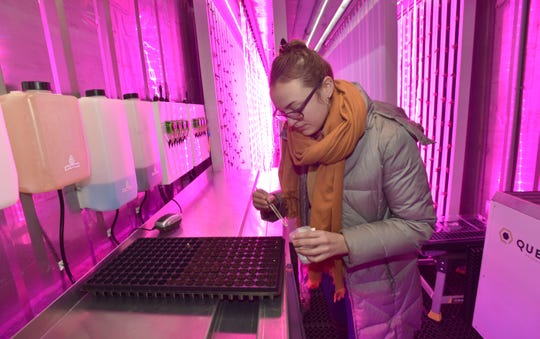Freight Farm assistant Charlotte Gale of Detroit inserts seeds into peat moss pods, where they start to grow, in a converted shipping container at Cass Community Social Services in Detroit.