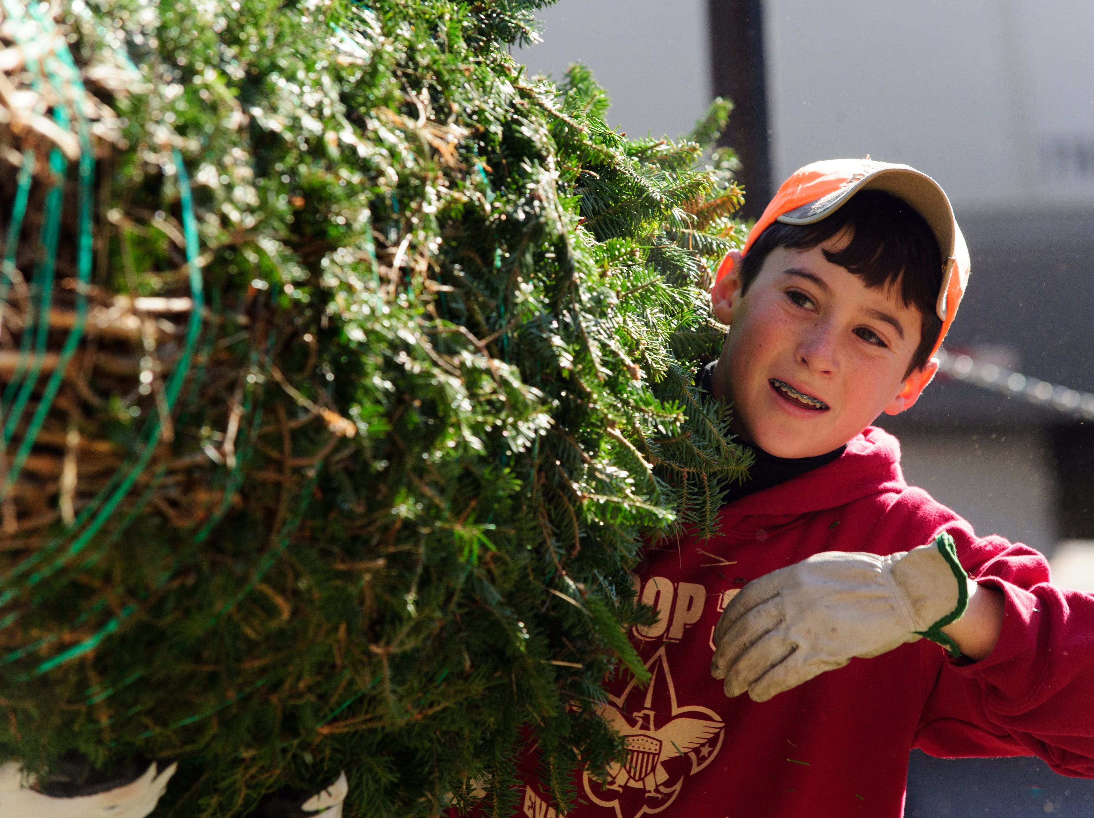 Dalton Peerman, 13, help bring a big tree to the Boy scout Troop 399  annual Christmas tree sale at Sacred Heart Catholic Church on West Franklin Street in Evansville, IN Friday morning Nov. 29, 2013.