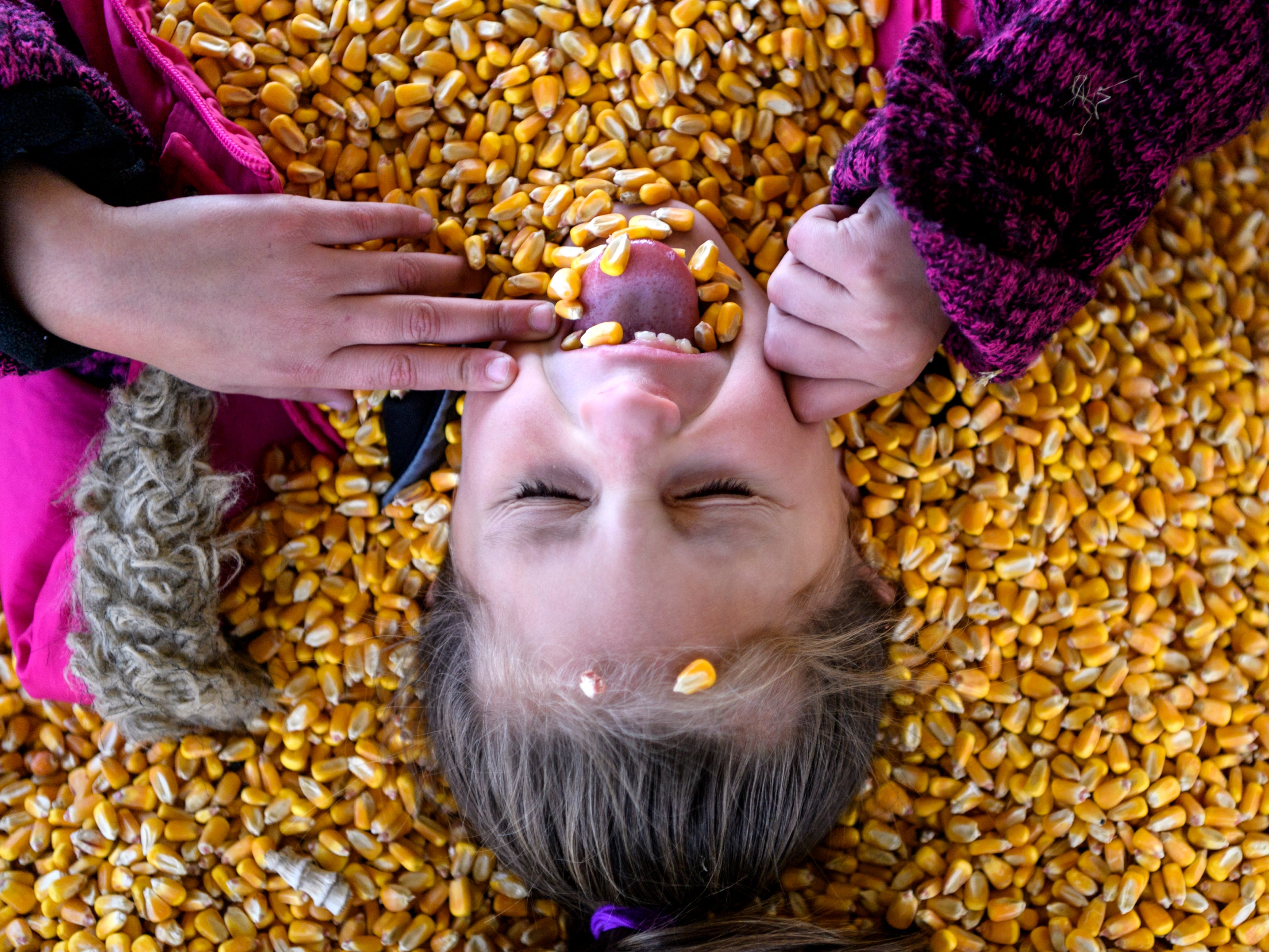 Aniya Connolly, a first grade student from Glenwood Leadership Academy in Evansville, accidentally gets corn in her mouth while pretending to swim and bury herself in the large pool of dried kernels at Cate's Farm Corn Maze and Pumpkin Patch in Henderson, Ky., Friday, Oct. 12, 2018.