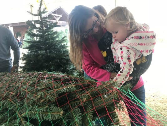 Christmas tree shopping - Christmas Trees: What You Should Know About Choosing A Tree In East TN