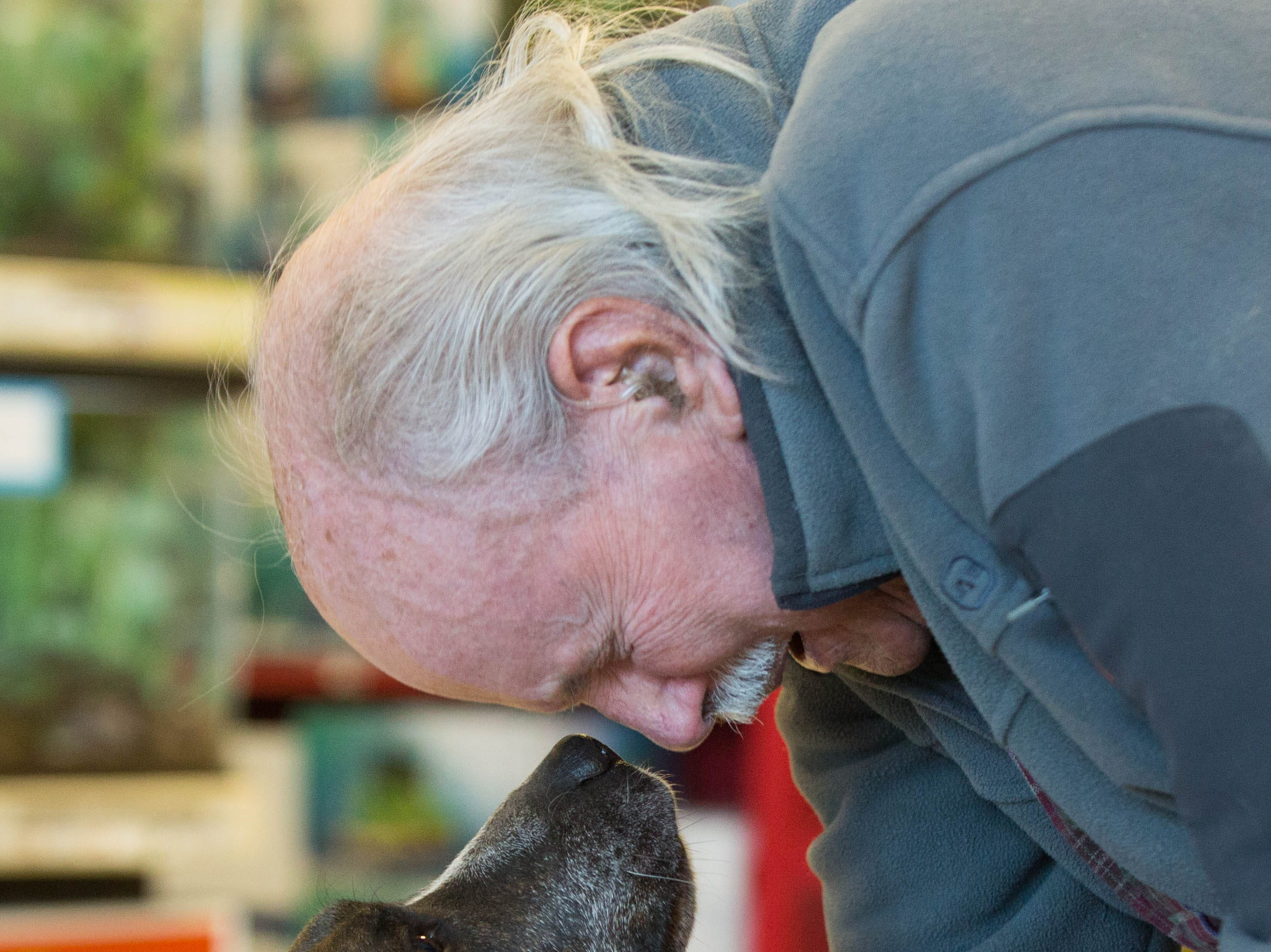 "Henry Evarts, asks his dog Sugar Plum for a kiss before a check presentation at PetCo on Lohman, Wednesday November 28, 2018.  PetCo is giving $10,000 to Animal Village of New Mexico, the orginization that Evarts adopted Sugar Plum from. Evarts said when asked about ""Sugar"" ""Well I'm 90 years old and when I'm with Sugar she makes me feel at least 89, she is a good dog...she is good company."""