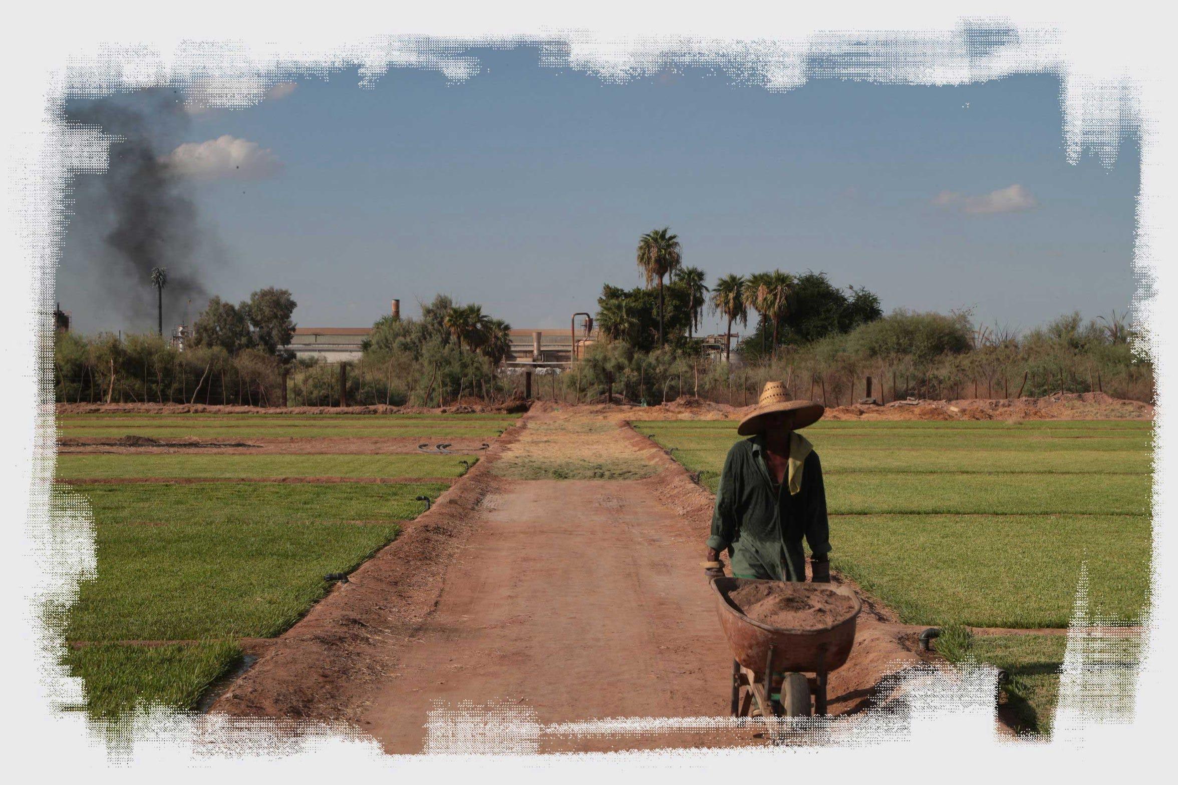 José García Núñez trabaja en su granja familiar en la que elabora bloques de césped, ubicada a un costado de la fábrica Industrias Zahori en Mexicali, México, el 20 de septiembre del 2018.