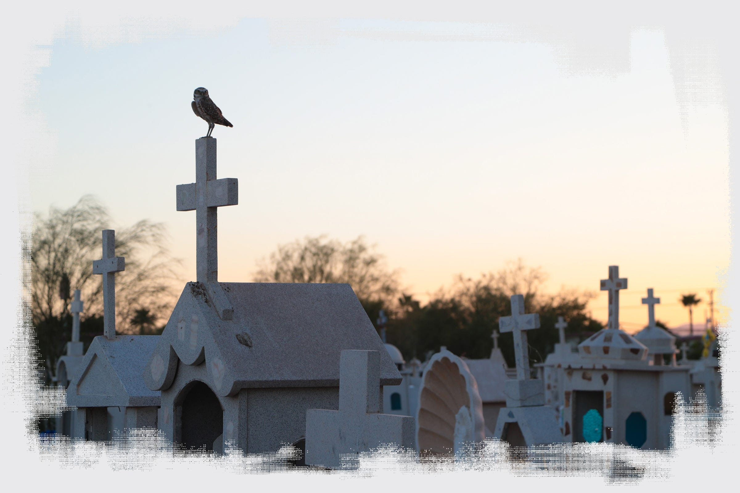 A burrowing owl perches atop a headstone at the Jardin Descanso Eterno Cemetery in Mexicali.