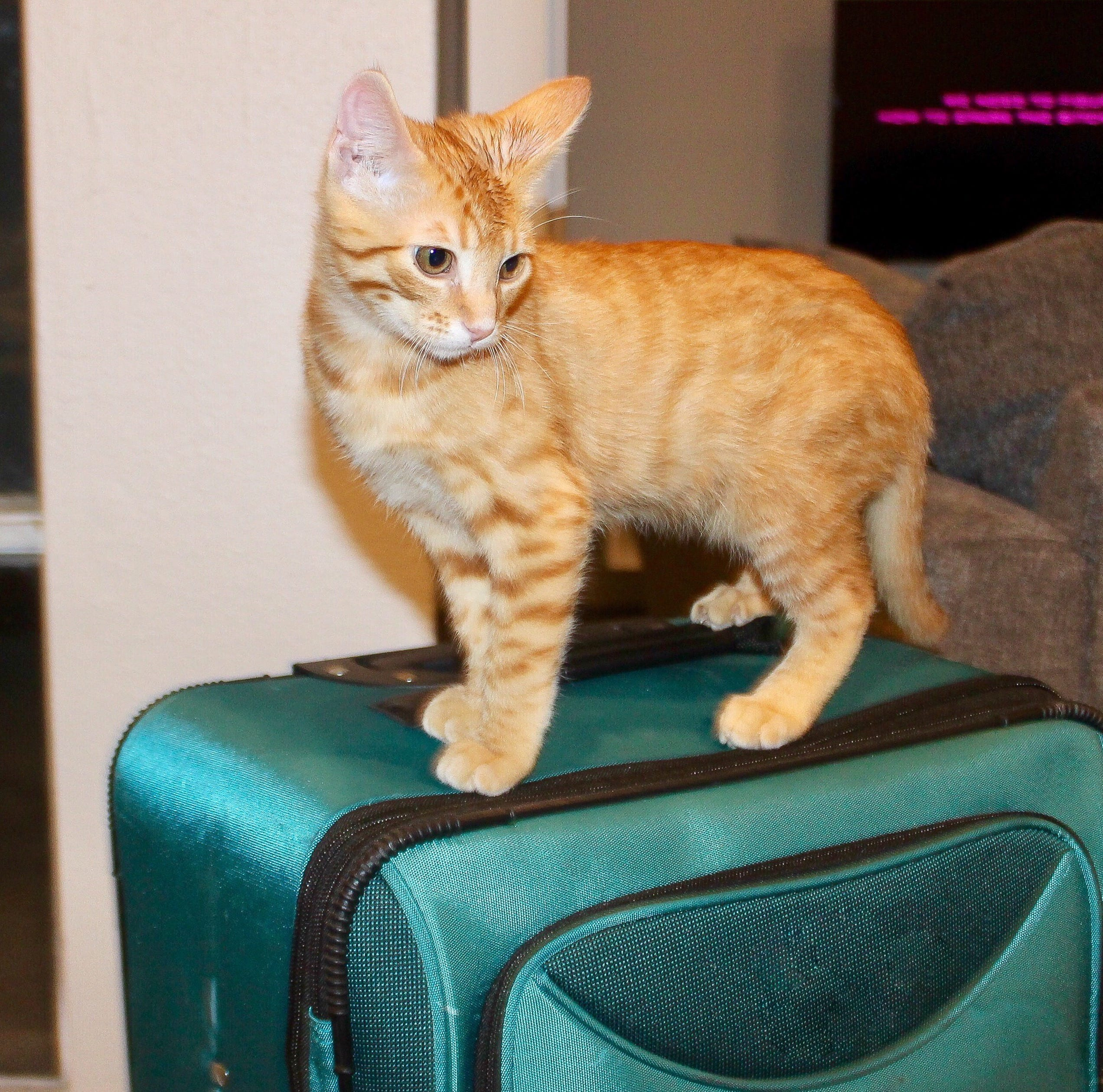 Traveling with pets doesn't have to be a scary task. Here's how to do it this holiday season