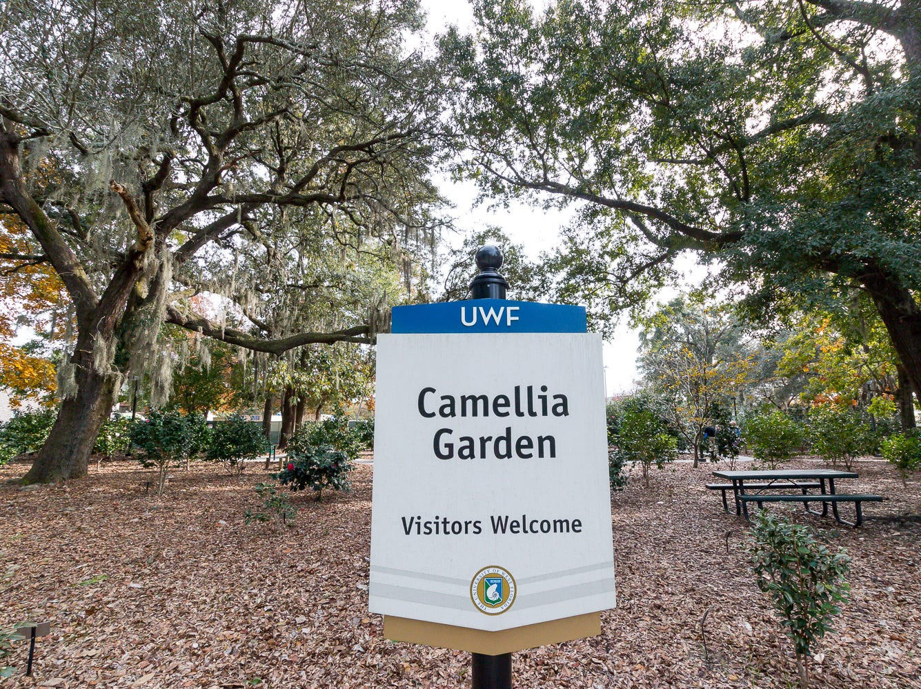 The Camellia Garden, co-sponsored by the Pensacola Camellia Club, has about 140 different camellia plants that bloom at different times throughout the year on the University of West Florida campus. Shown on Wednesday, November 28, 2018, the garden is located just east of Building 41 for Pyschology and Behavioral Sciences.