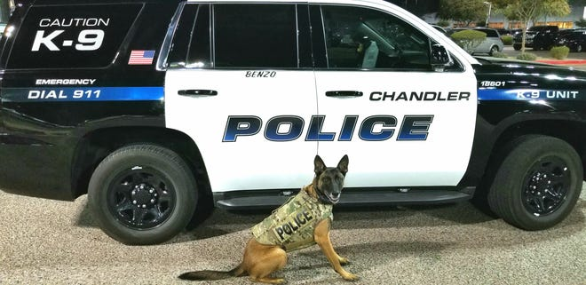 Chandler Police K9 officer, Benzo, wearing his donated vest.
