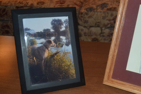 """Tipper looks out over the water in this old photo. """"Tipper's Tales"""" shares stories about Tipper's adventures and the many friends she made out in nature."""