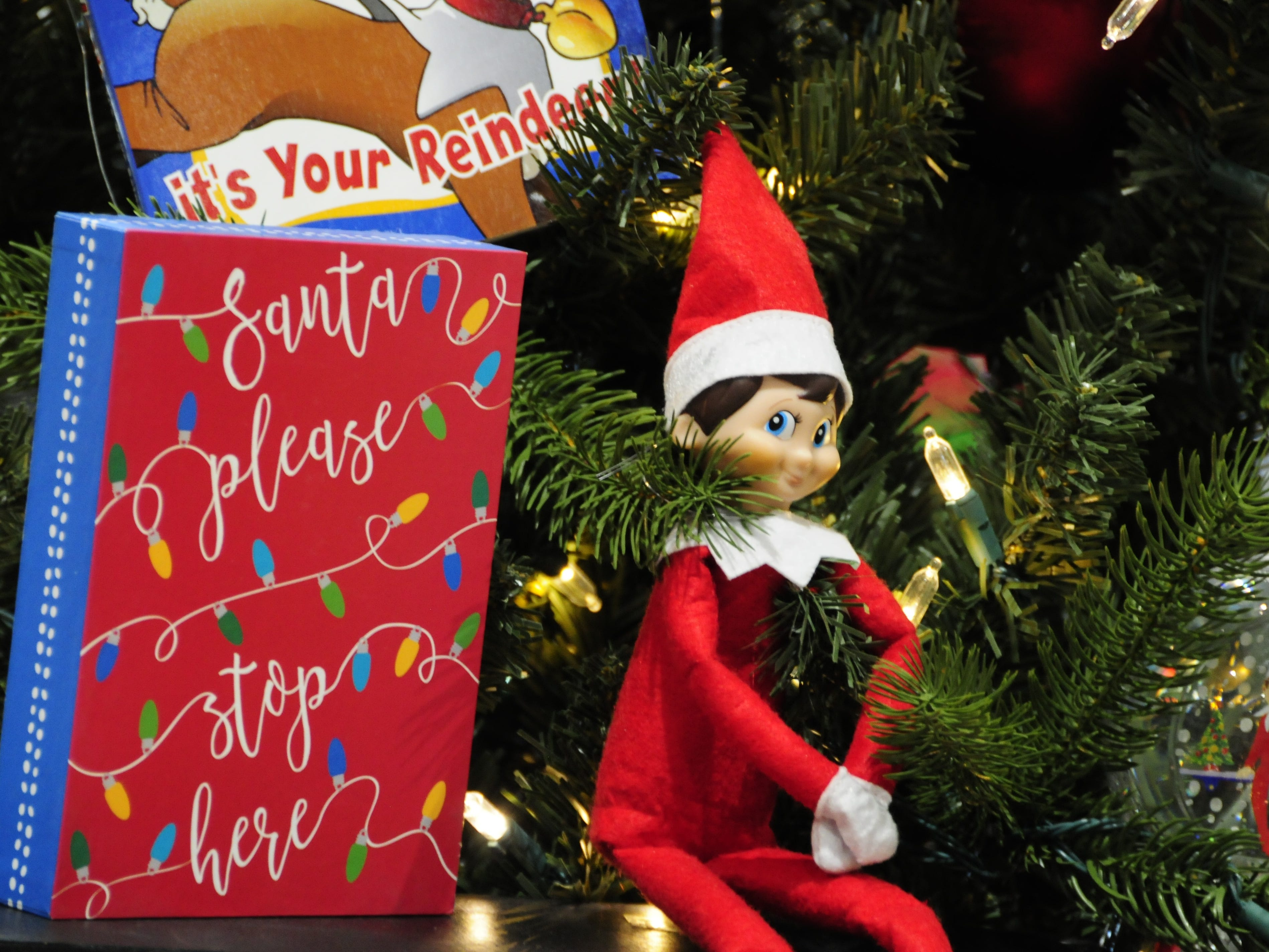 The Elf on the Shelf sits patiently Wednesday during preparations for the Festival of Trees, Friday through Sunday at the Blue Water Convention Center.