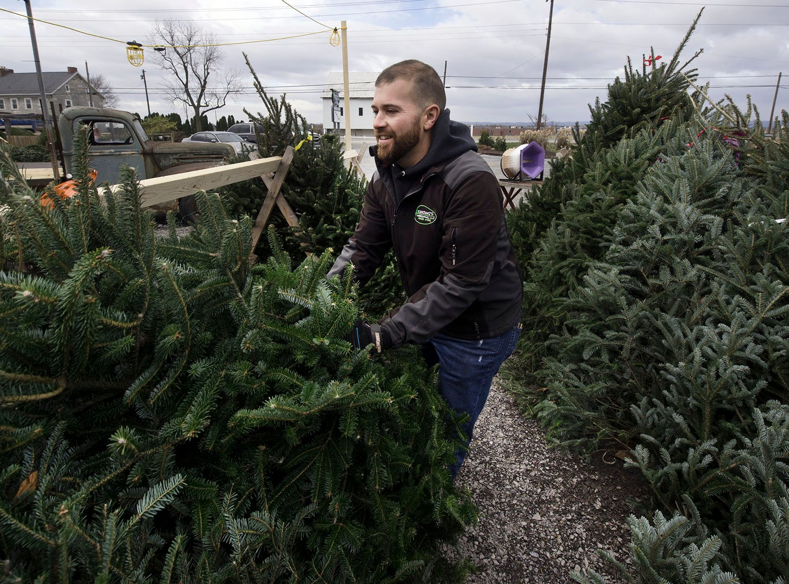 Jordan Klenzing, co-owner Klenzing Landscaping, LLC, 2922 Molly Pitcher Highway, Chambersburg, picks up Christmas trees that were knocked over during windy conditions on Wednesday morning Nov. 28, 2018. Klenzing's carries a variety of trees during the holiday season.