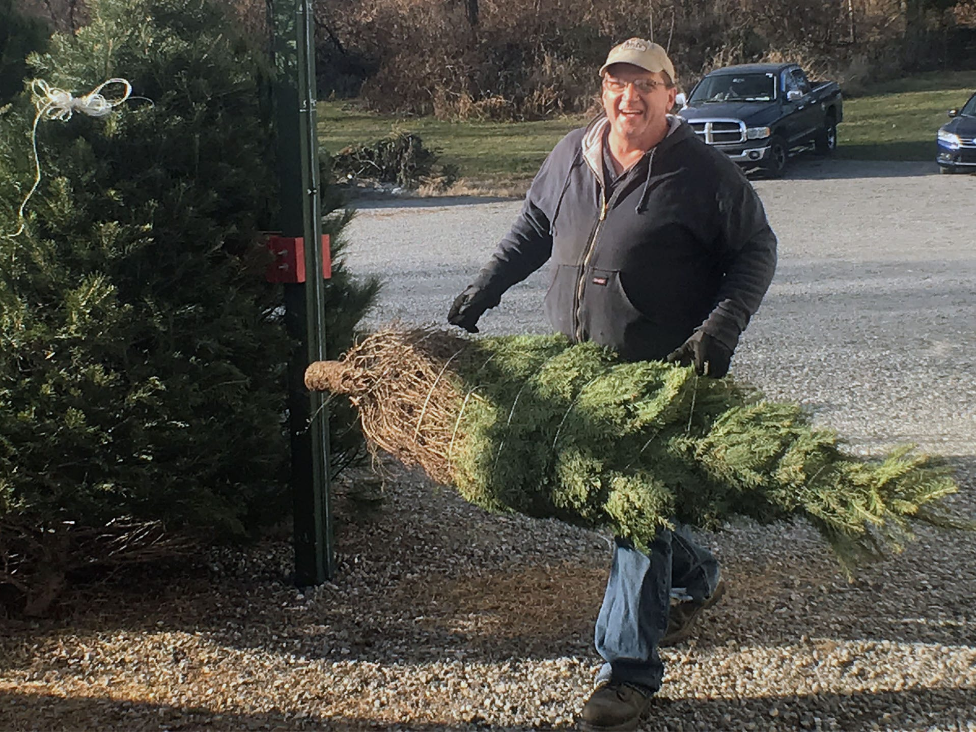 Richard Lynch Jr. carries a Christmas tree for customers on Friday, November 23, 2018 at Pine View Haven Christmas Trees in St. Thomas.