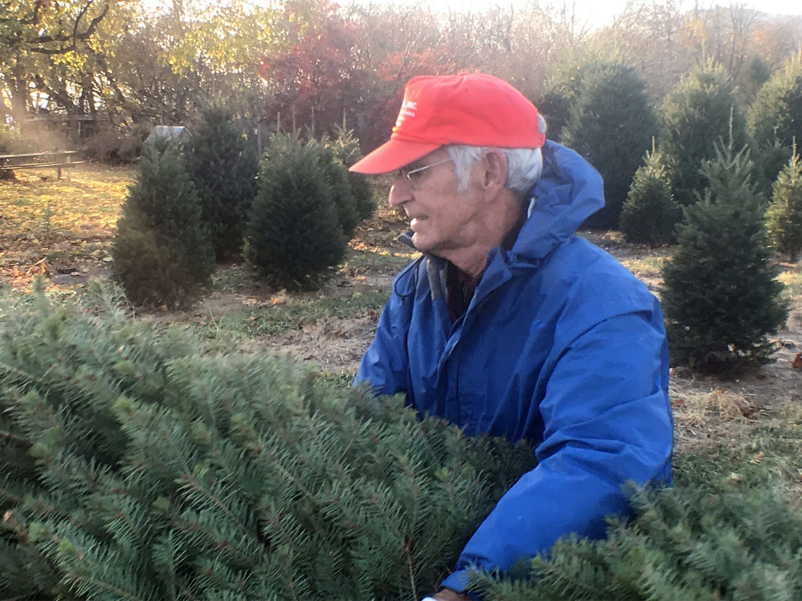 Galen May, owner, packs up Christmas trees for customers on Friday, November 23, 2018 at Pine View Haven Christmas Trees in St. Thomas. For many families, the day after Christmas is the time to buy a tree for the holidays.