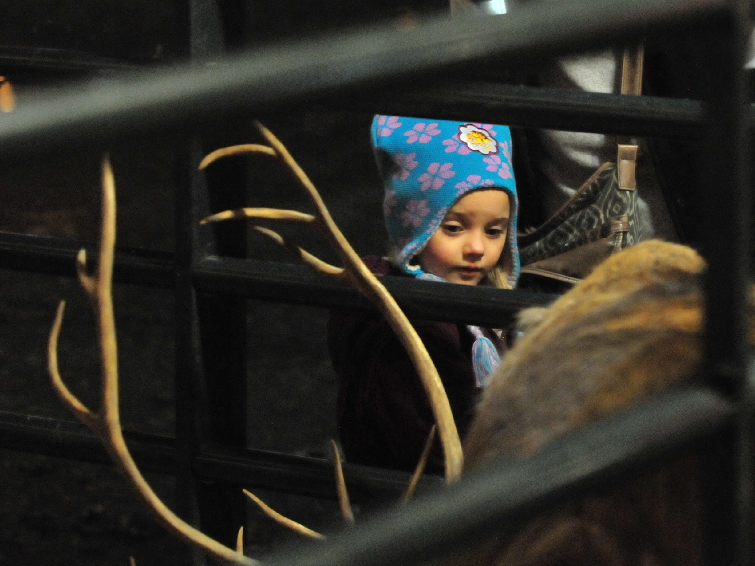 Zoey DeArmond, 2, pets a reindeer Tuesday during the 14th annual Old-Fashioned Christmas Festival.