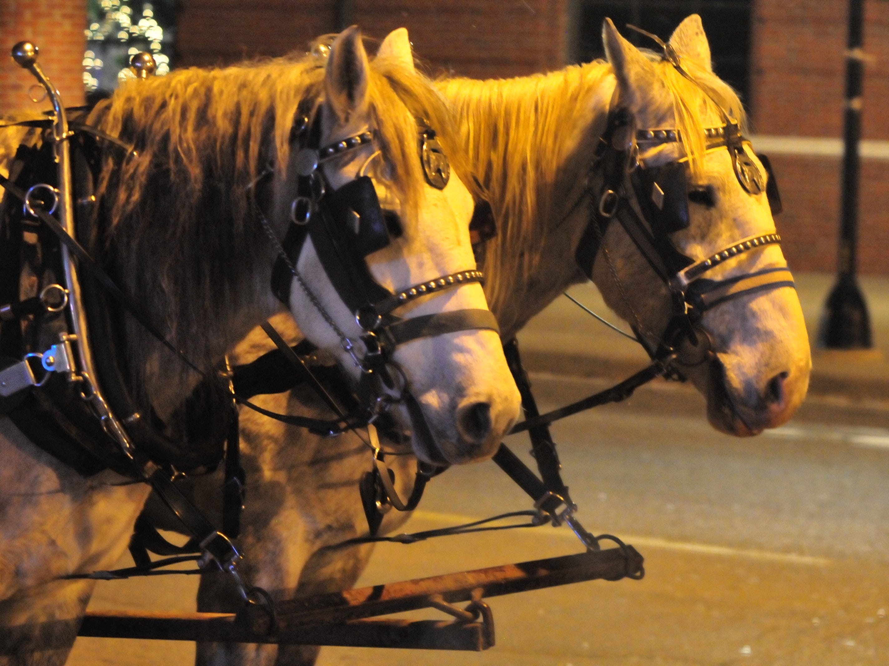 Horses wait to provide more wagon rides Tuesday during the 14th annual Old-Fashioned-Christmas Festival.