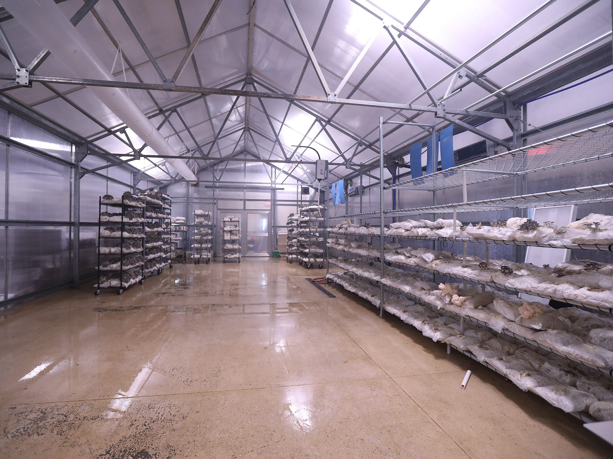 Mushrooms at Leep Foods end up in this room in their final stages of growth.