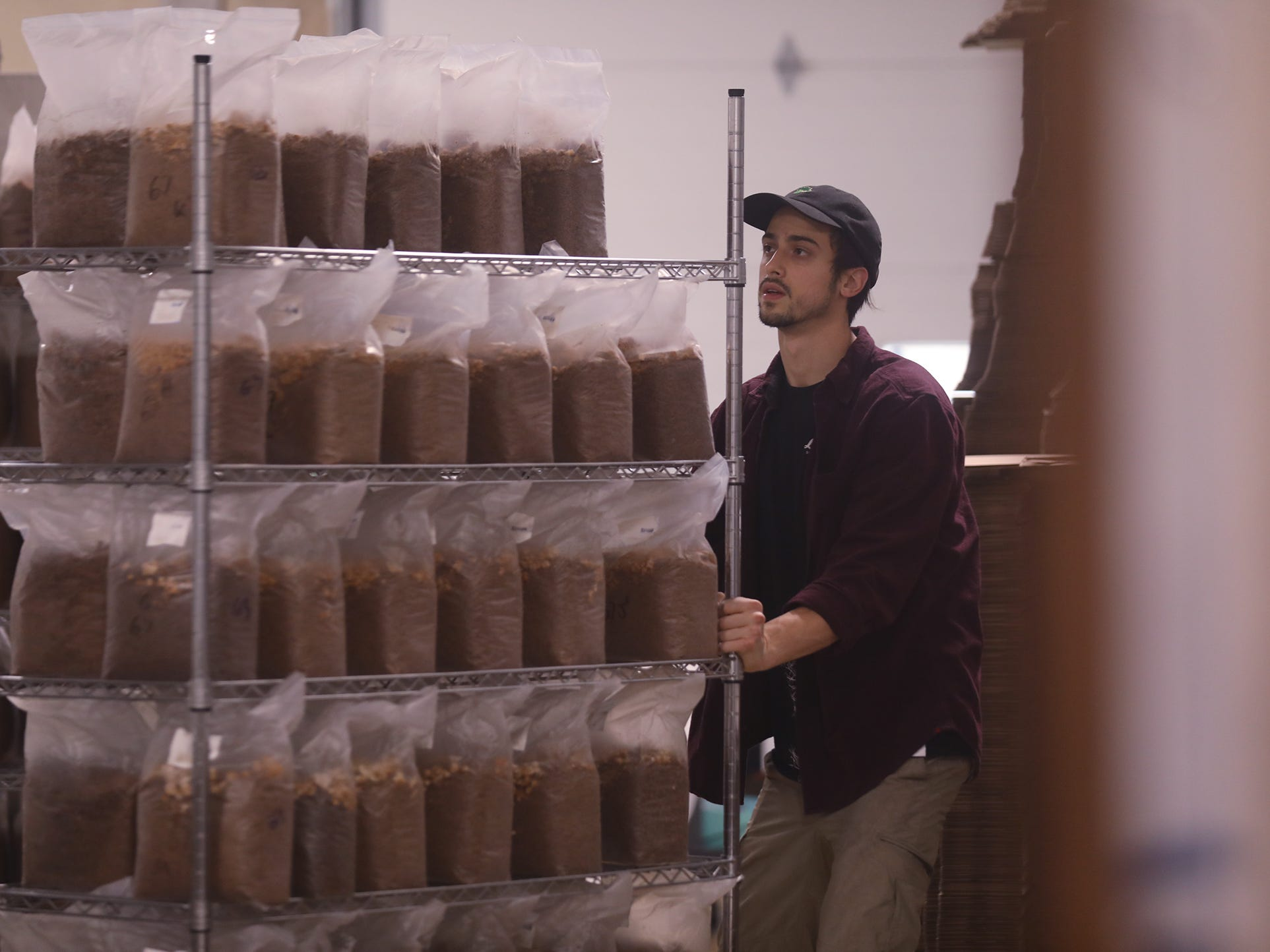Nick Pesesky moves a rack of mushrooms to another part of the growing facility to mark the bags with the type of mushroom growing.