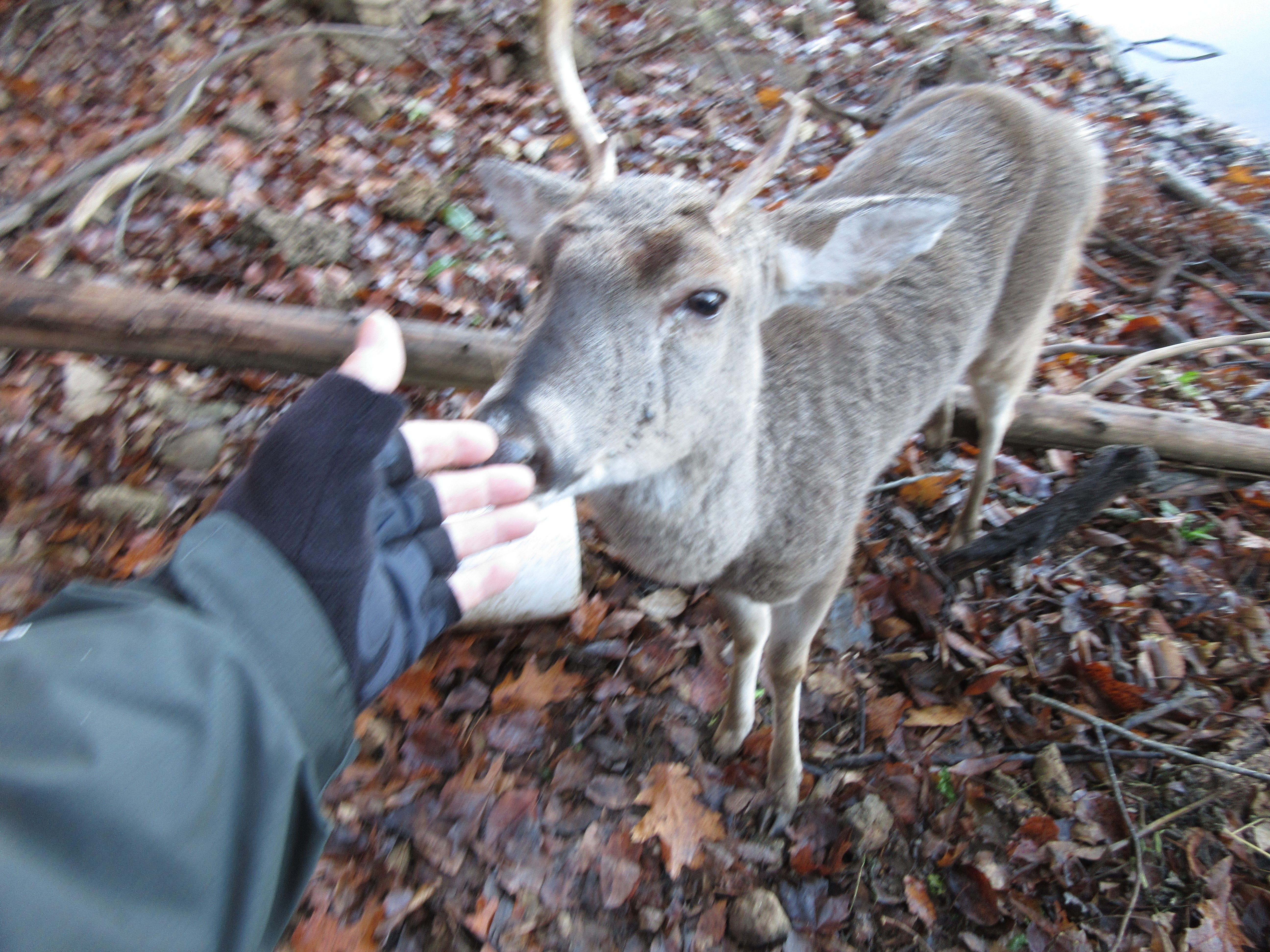 """Larry Rottmann nicknamed the injured buck """"Buster"""" and returned to check on him over several days."""