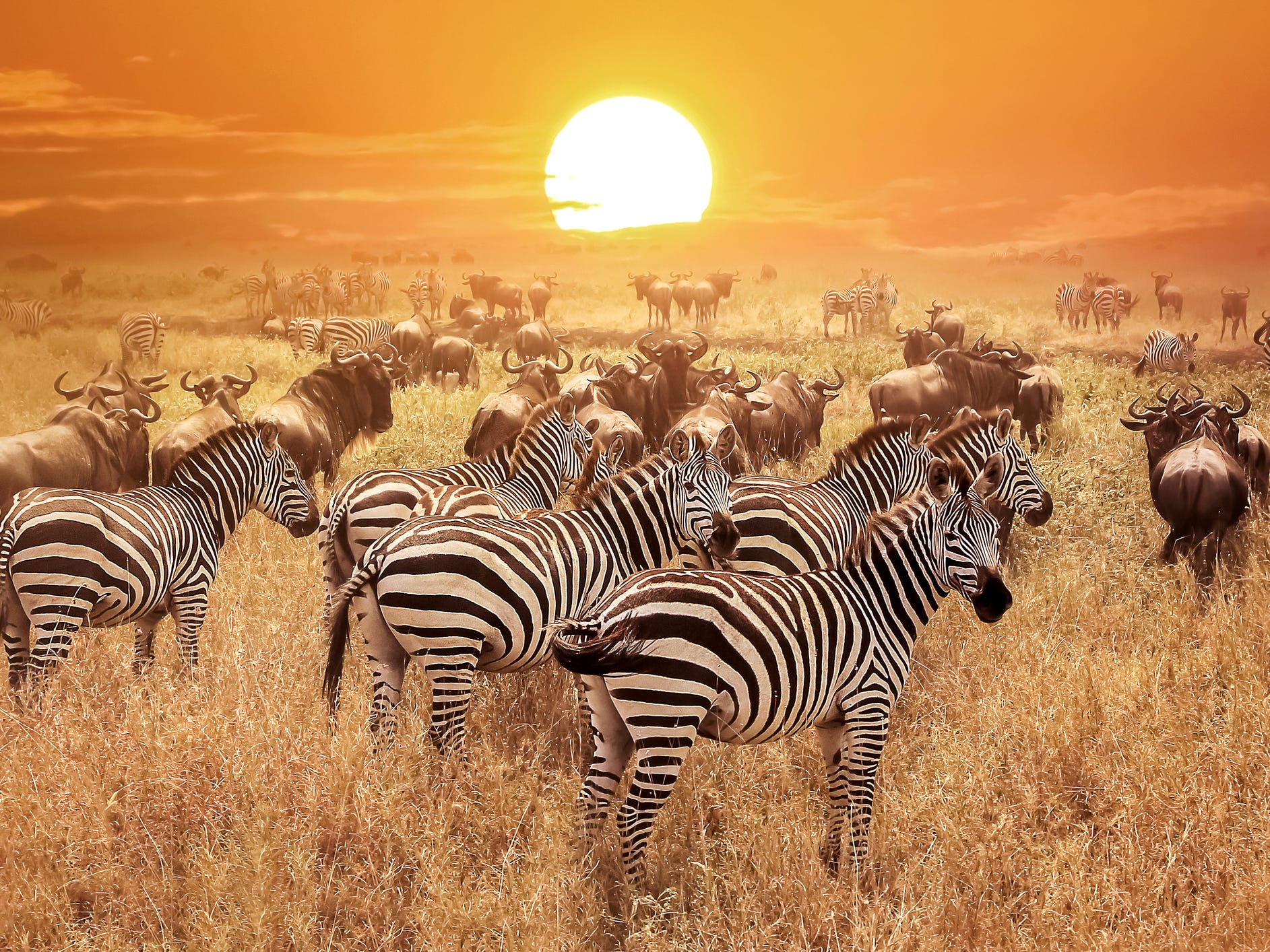 Tanzania: No wildlife lover should pass up a chance to see Africa's legendary Big Five: lions, rhinos, elephants, leopards and Cape buffalo. In Tanzania you'll find them all plus many more, including hippos, giraffes and zebras. The country is most famous for the Great Migration, when millions of wildebeest move en masse from the Serengeti in Tanzania to the Masai Mara in neighboring Kenya; June and July are the best months for viewing the migration in Tanzania.