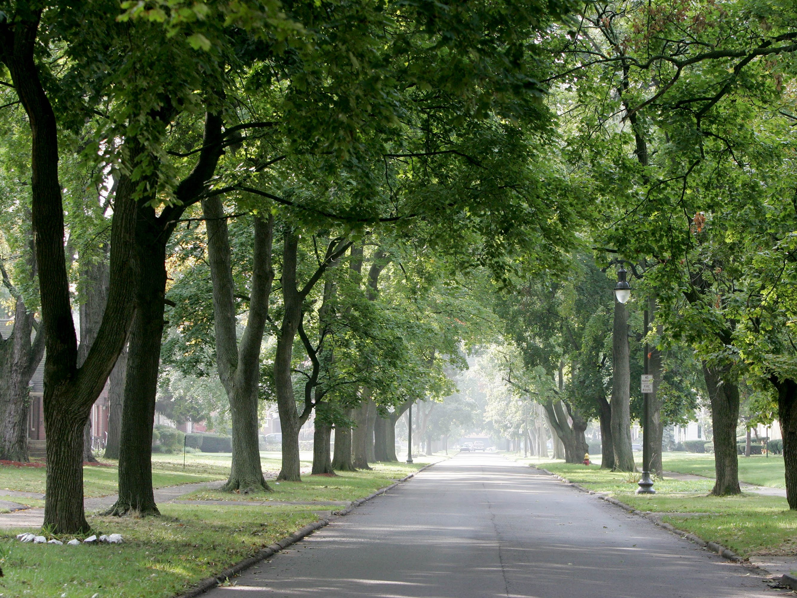Michigan senator wants to cut local communities' control over trees