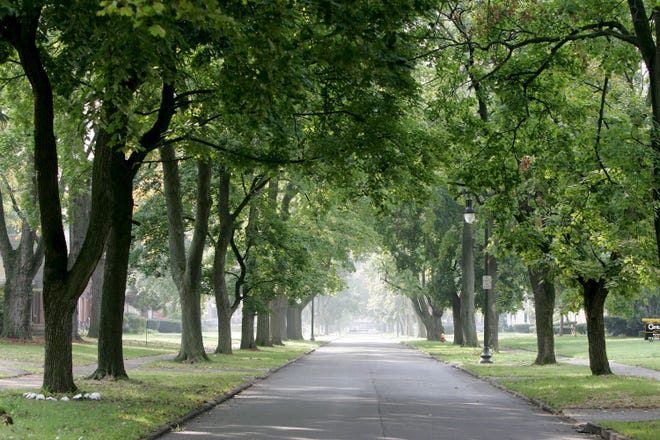 A tree lined street in Detroit