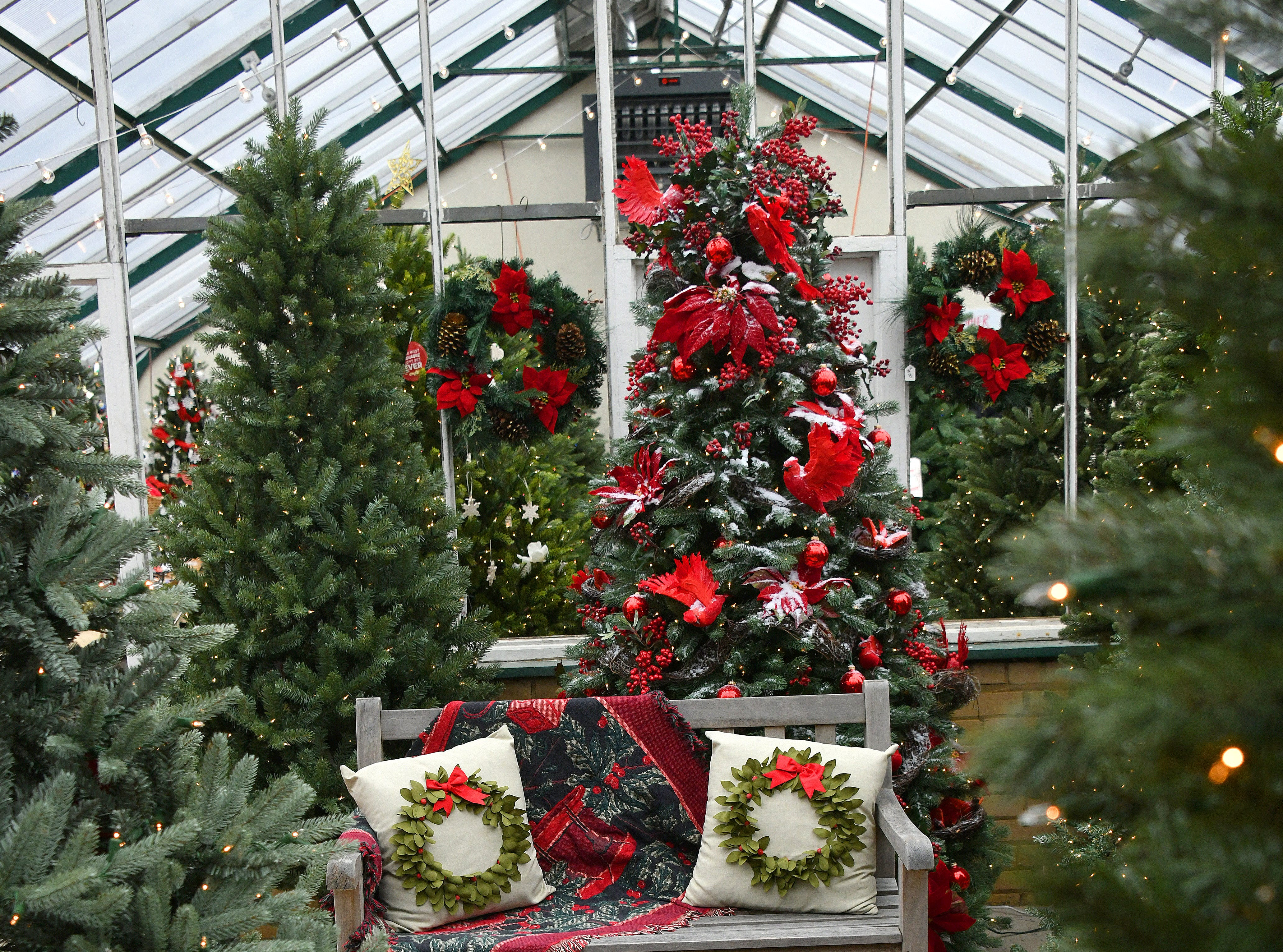 A cozy bench is nestled among Christmas trees in the greenhouse, ready for family pictures. The manor had extensive gardens and a large greenhouse, as the Earharts were avid gardeners.