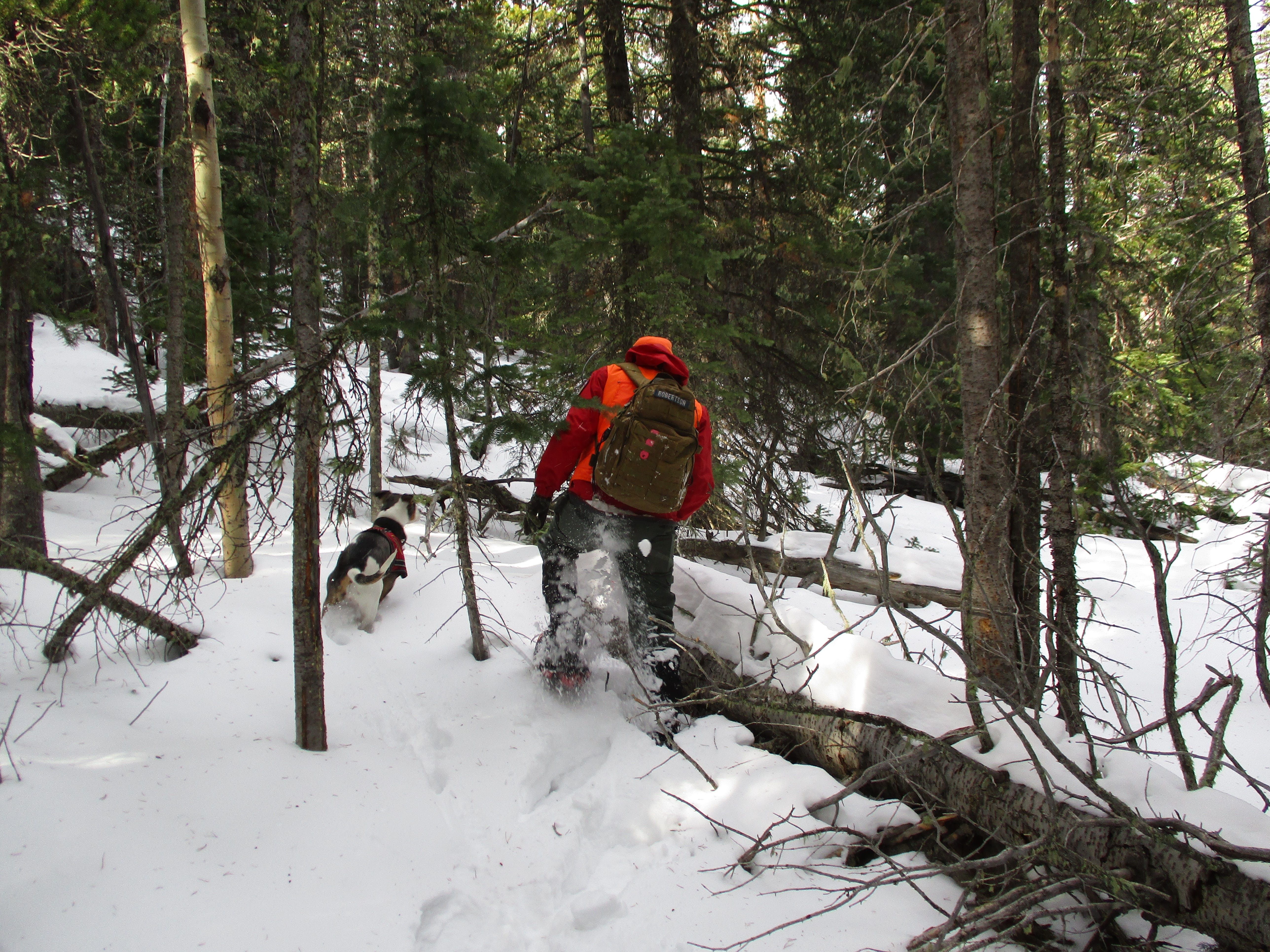 Larimer County Search and Rescue Dog Team  assist RMNP SAR search for Micah Tice on November 28, 2018.