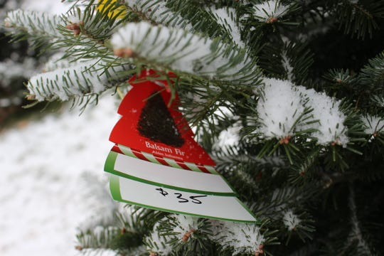 If you haven't gotten a Christmas tree yet, there are many options a short drive from Green Bay, including Wojcik's Christmas Tree Farm just east of Pulaski.
