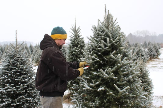 Buy Photo. Luke Wojcik, owner of Wojcik's Christmas Tree Farm ... - Christmas Tree Farms Spruce Up Green Bay Area With Options