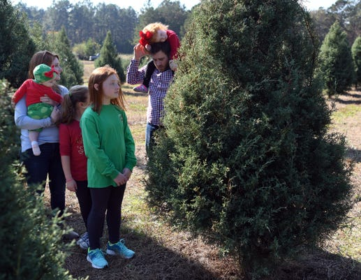 Christmas Tree Farm3