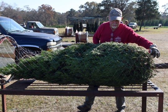 Robert Smith helps wrap a Christmas tree at Smith's Christmas Tree Farm in Moselle. Many people who prefer a real tree enjoy the smell and the firewood it provides after the holiday.
