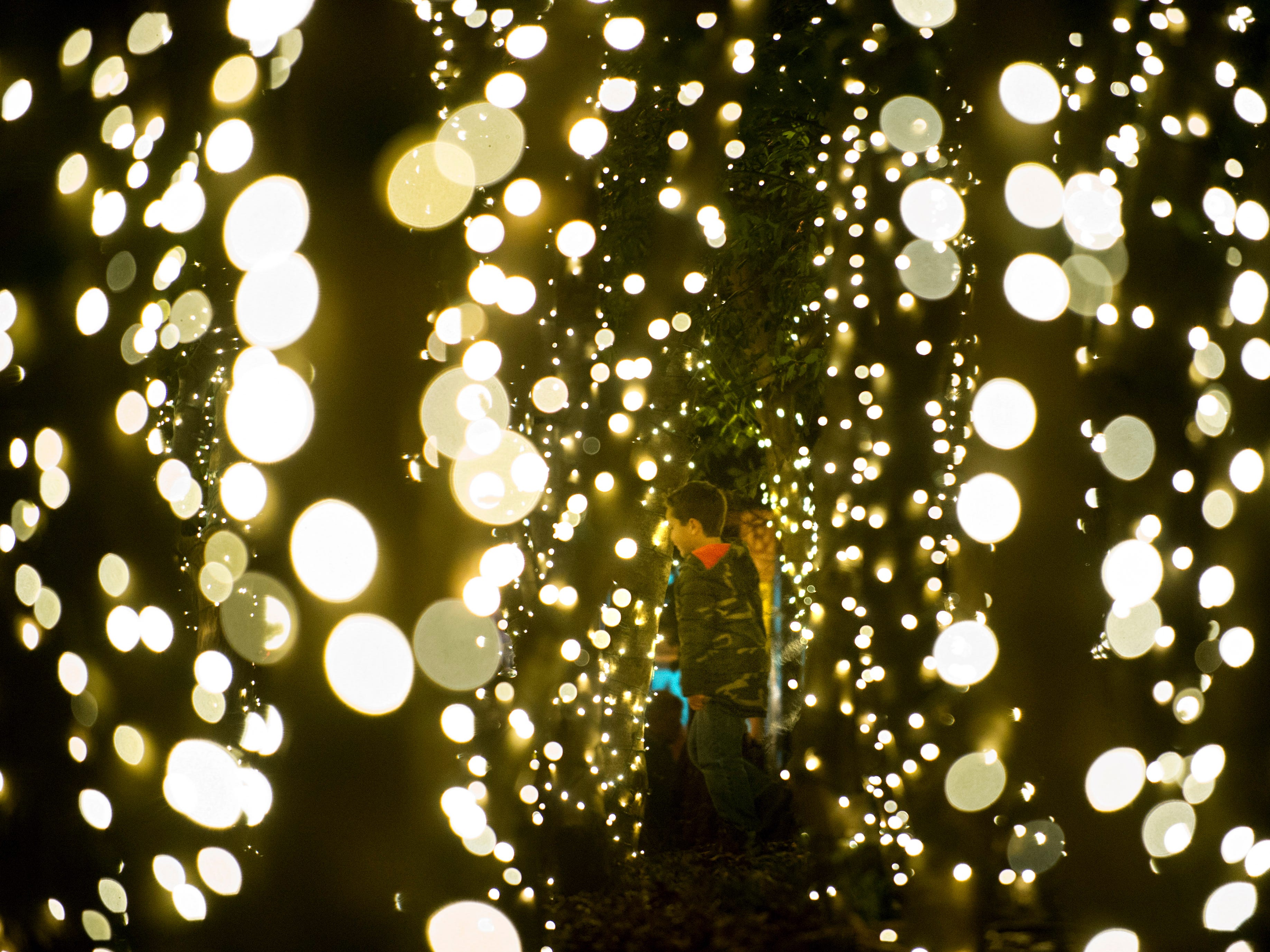 A young reveler runs between trees lit in Krutch Park for the Regal Celebration of Lights during Christmas in the City festivities in downtown Knoxville on Friday, Nov. 28, 2014.]