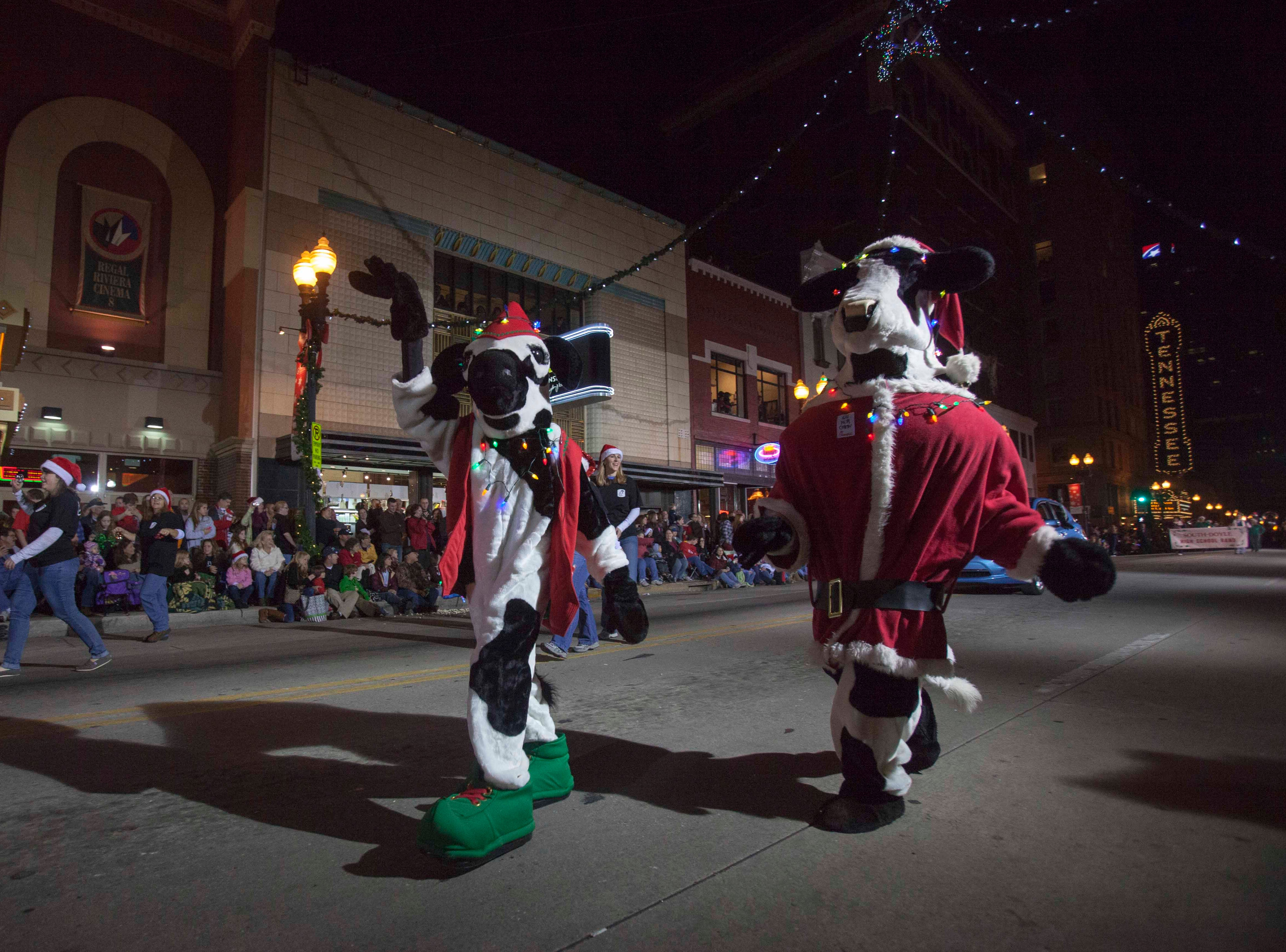 Chick Fil A cows wave as they march down Gay Street during the Christmas parade downtown Friday, Dec. 7, 2012.
