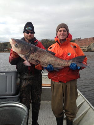 David Rowe, DNR fisheries supervisor (left)  and Alex Bentz, a fisheries technician, hold a bighead carp captured on the Wisconsin River in 2017.