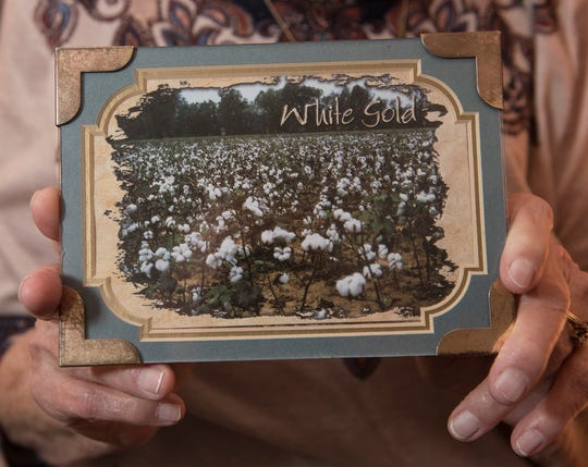 Mildred Davis holds a framed postcard showing a cotton field. Davis left school to pick cotton on the family farm.