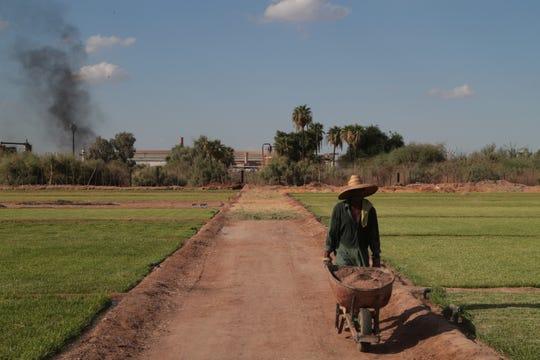 José García Núñez works on his family's grass farm next to the Industrias Zahori factory in Mexicali
