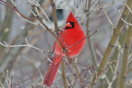A Cardinal made the trip worthwhile.