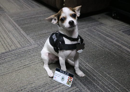 K-9 Zorro poses with his official Marblehead Police Department ID. His badge is on the way.
