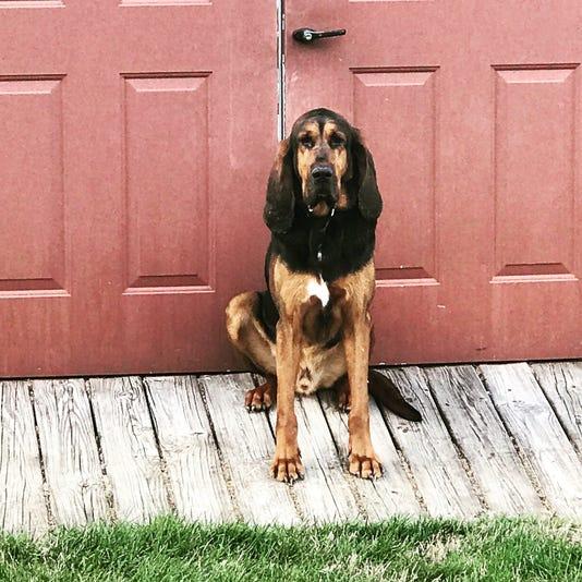 Bloodhound Gunner